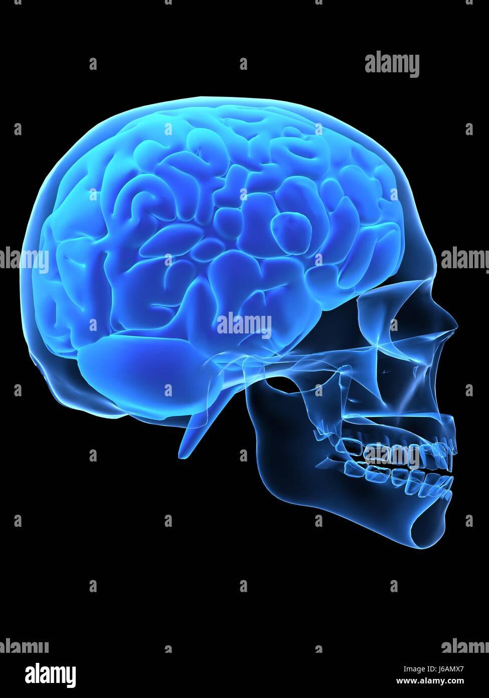 subconscious mind stock photos  u0026 subconscious mind stock