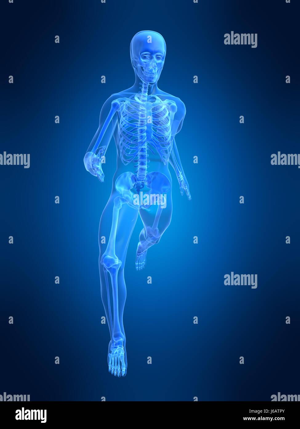 sport sports medicinally medical human human being skeleton anatomy ...