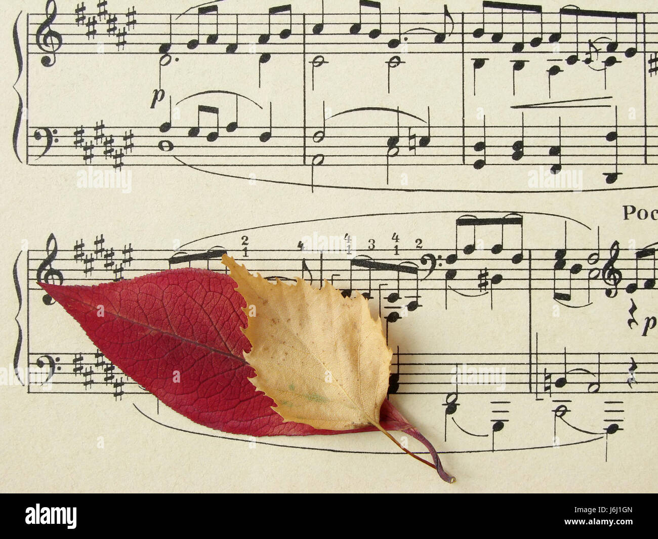 Musical stave stock photos musical stave stock images for The craft of musical composition