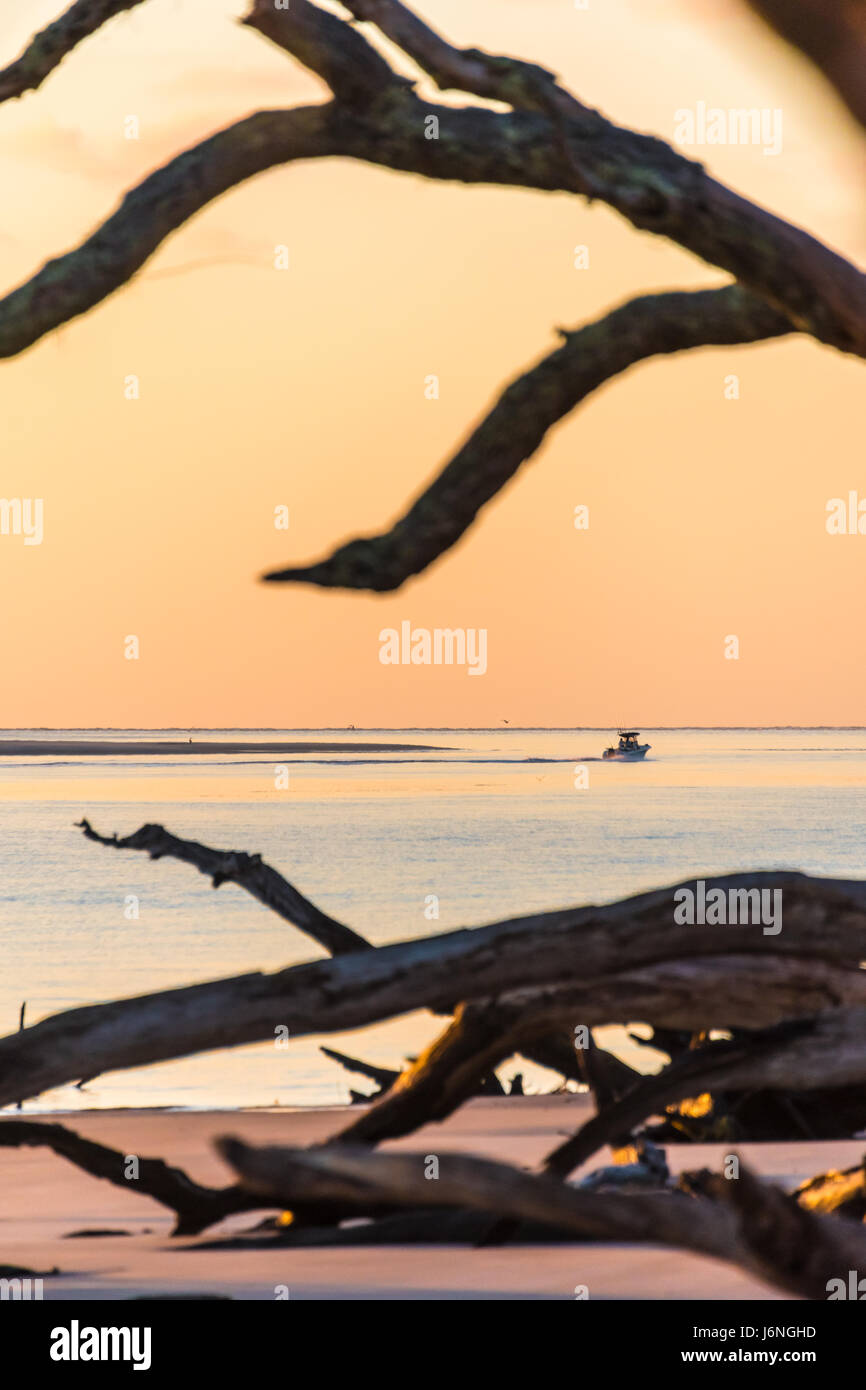 fernandina beach big and beautiful singles Discover fernandina beach fl and see all the fernandina beach fl homes for sale in this area  and single family homes  restaurants and those beautiful beaches.