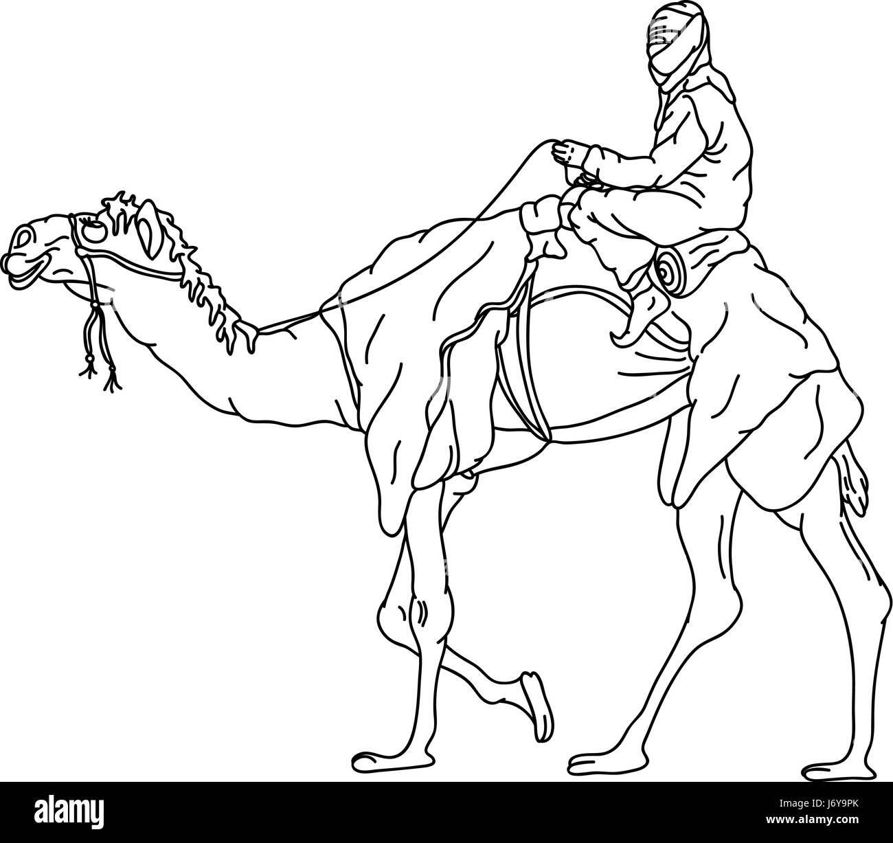 arabian camel black and white stock photos u0026 images alamy