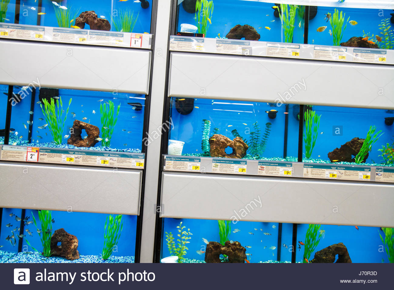 Petco stock photos petco stock images alamy for Petco fish for sale
