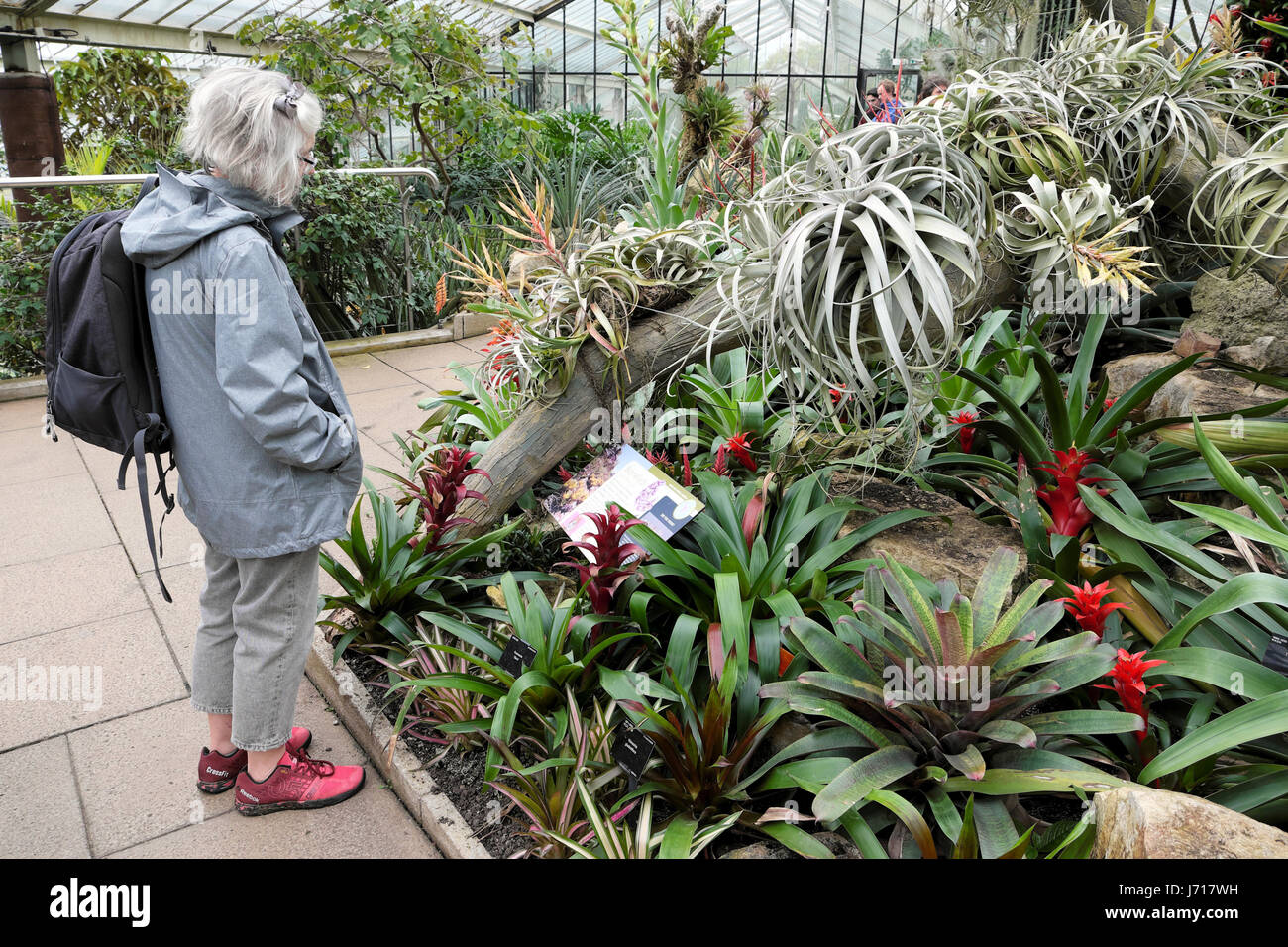 A Senior Woman With Silver Hair Reads The Bromeliad Information Panel In  The Princess Of Wales