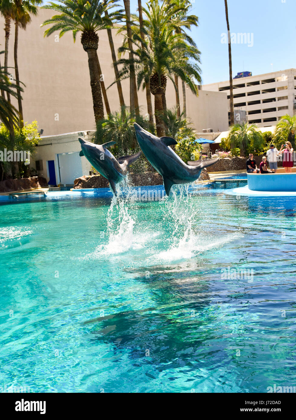 dolphins at the mirage secret garden in las vegas nevada - Secret Garden Las Vegas
