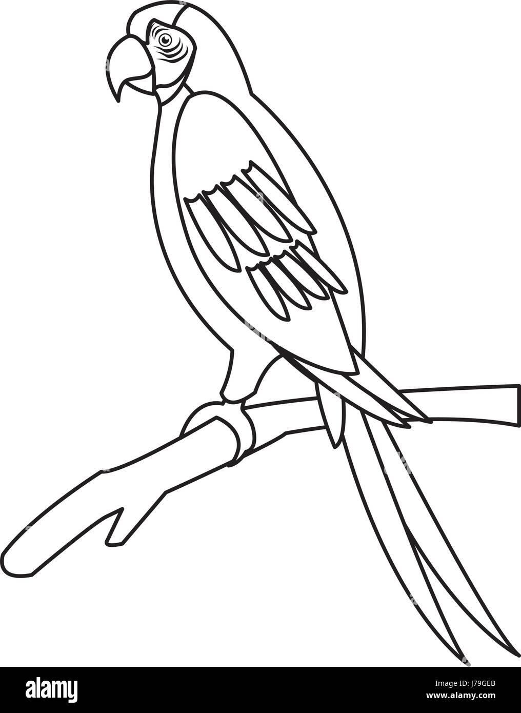 macaw parrot branch brazil bird wildlife outline
