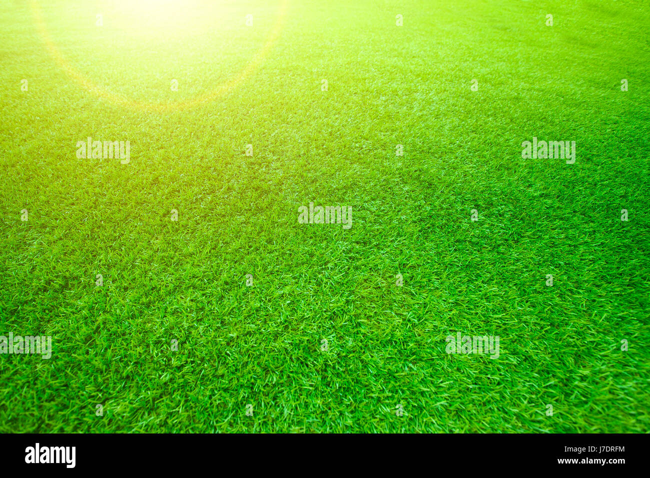 sun light effect on shallow depth of field green grass pattern use ... for Sun Light Effect Background  111ane