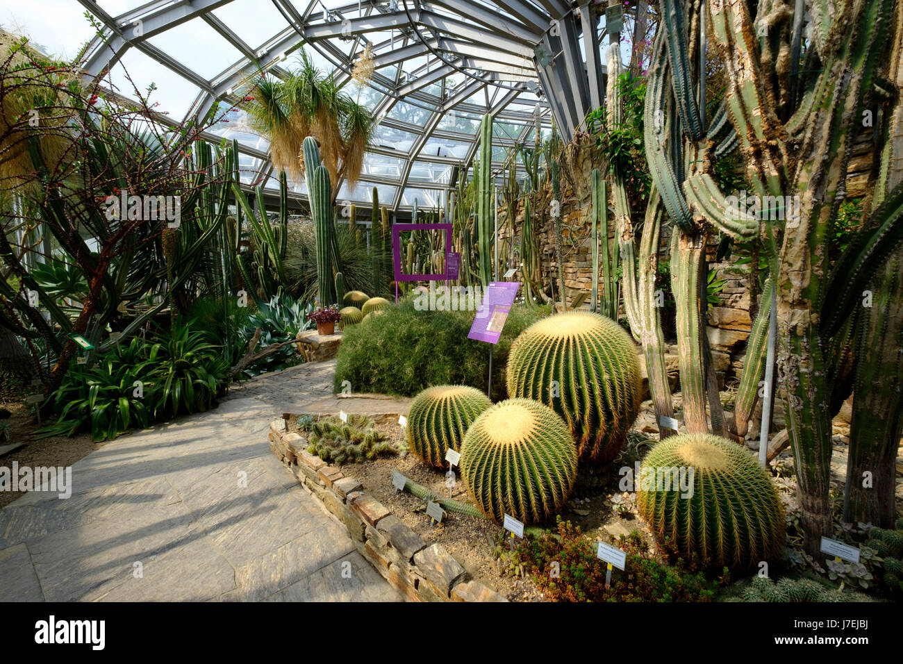 Superbe Cactus Display In Greenhouse At Berlin Botanical Garden In Dahlem, Berlin,  Germany