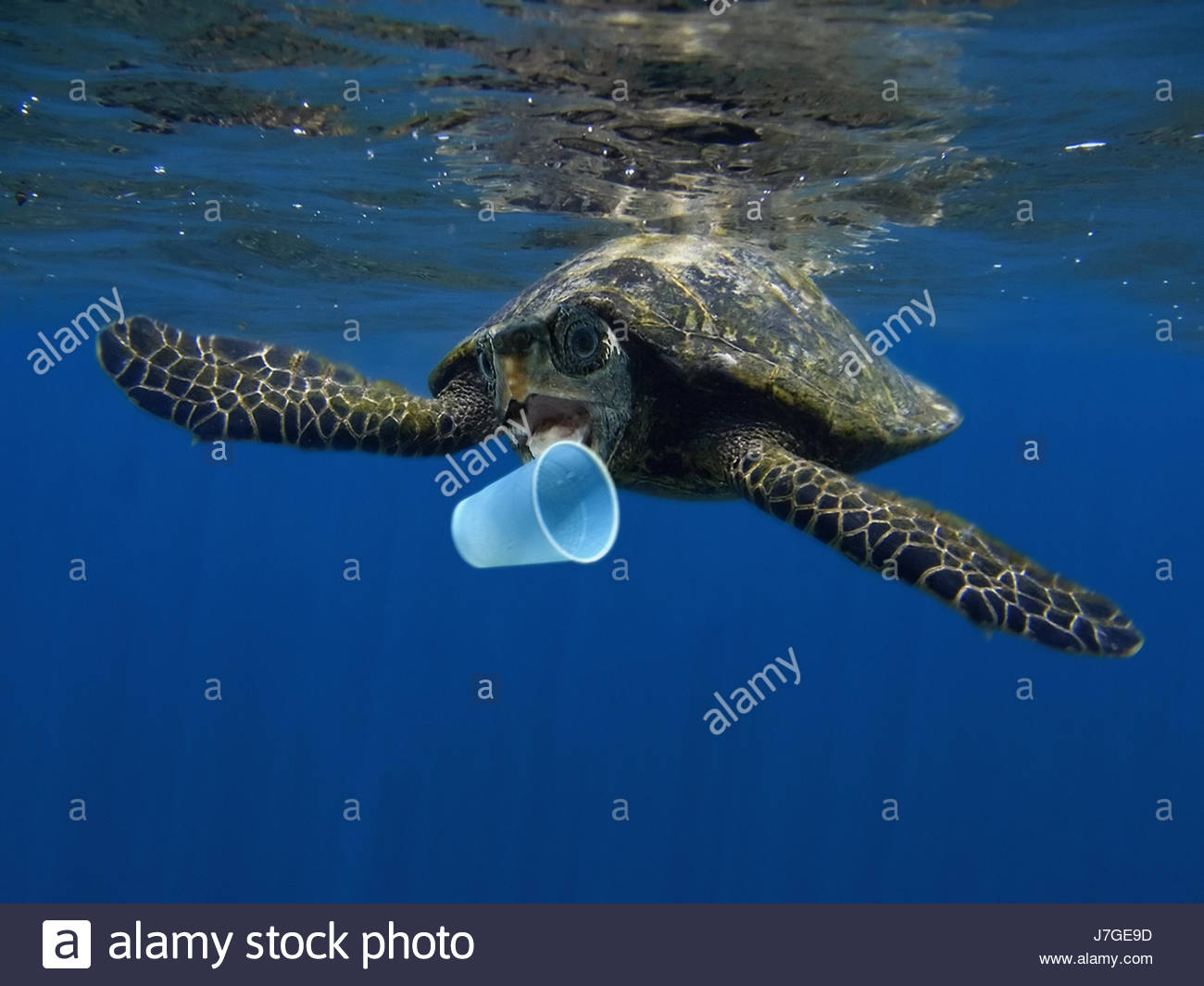 Kids Eating Turtles