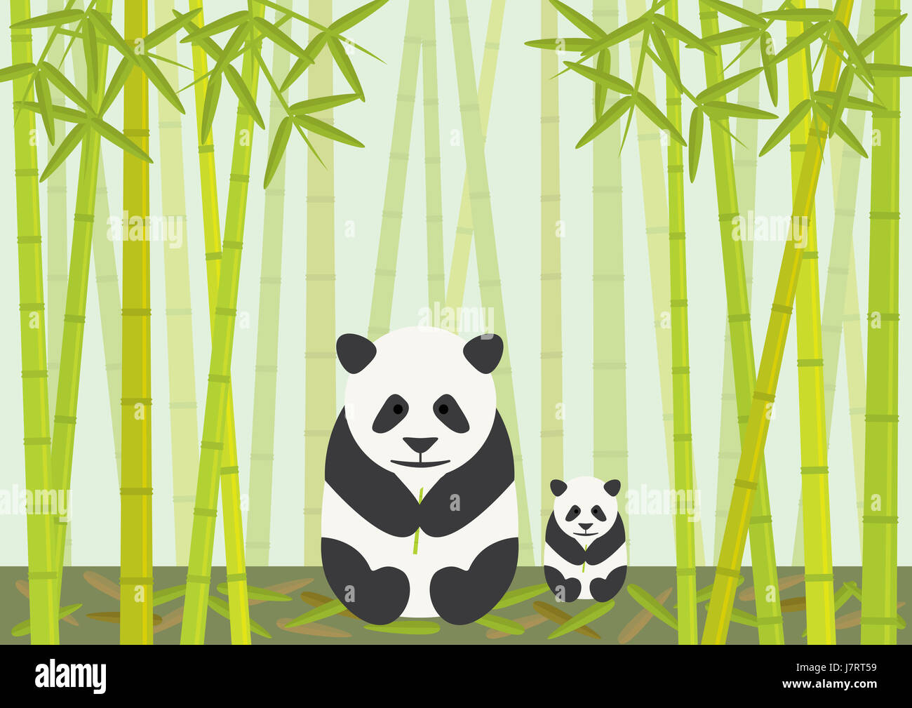 animal bear wildlife bamboo china cub baby panda eating eat eats