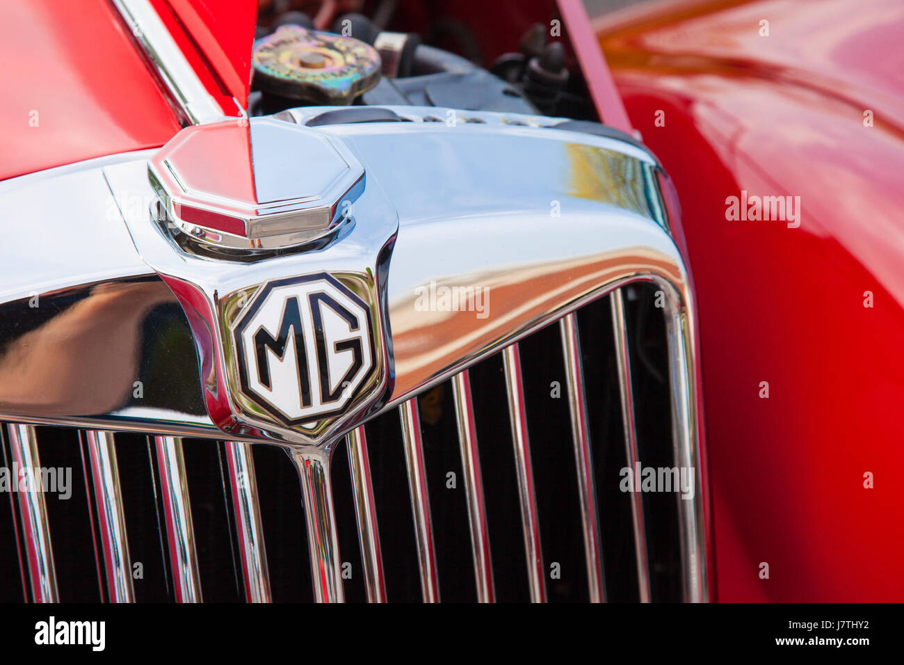 Front grill of a british sports car 1955 mg tf 1500 roadster on front grill of a british sports car 1955 mg tf 1500 roadster on display in franklin tennessee usa vanachro Images