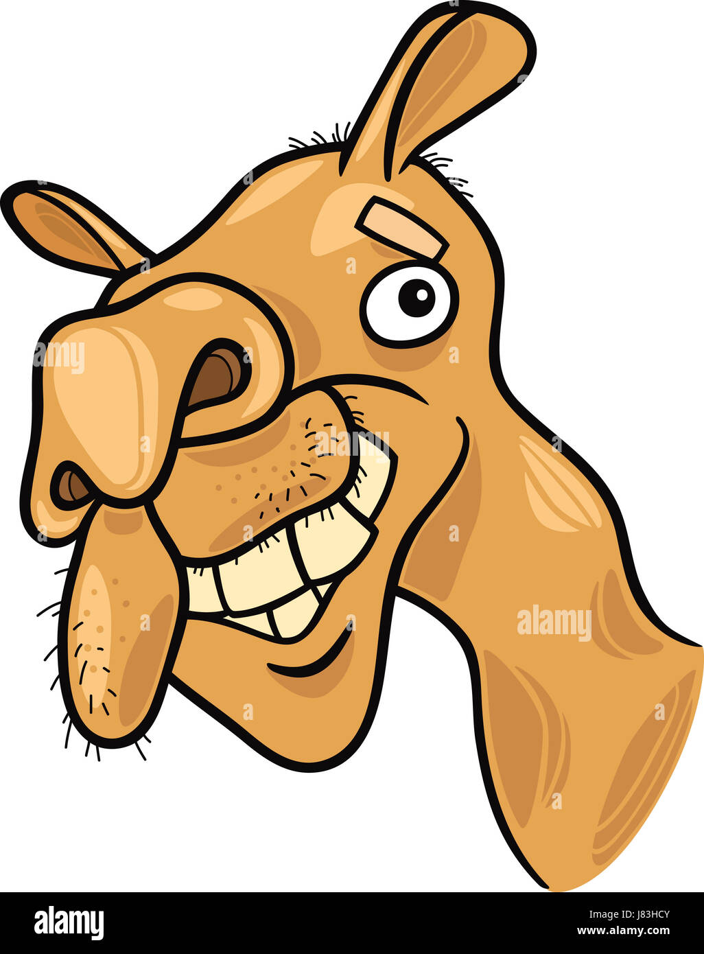 animal asia africa camel illustration funny cartoon laugh laughs