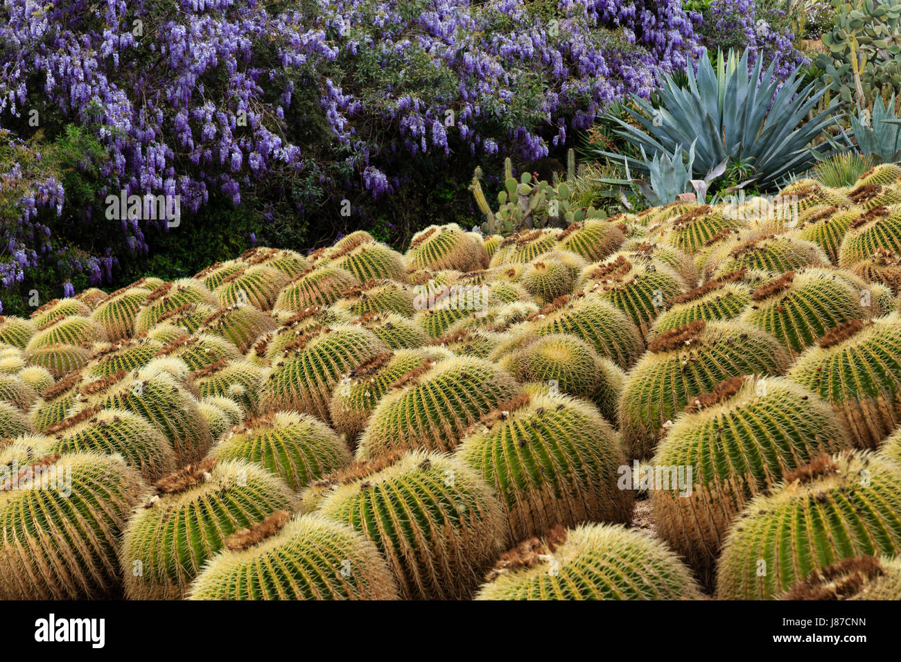 Costa brava jardins botaniques marimurtra botanical gardens - Spain Catalonia Costa Brava Blanes Pinya De Rosa Tropical Botanical Garden With