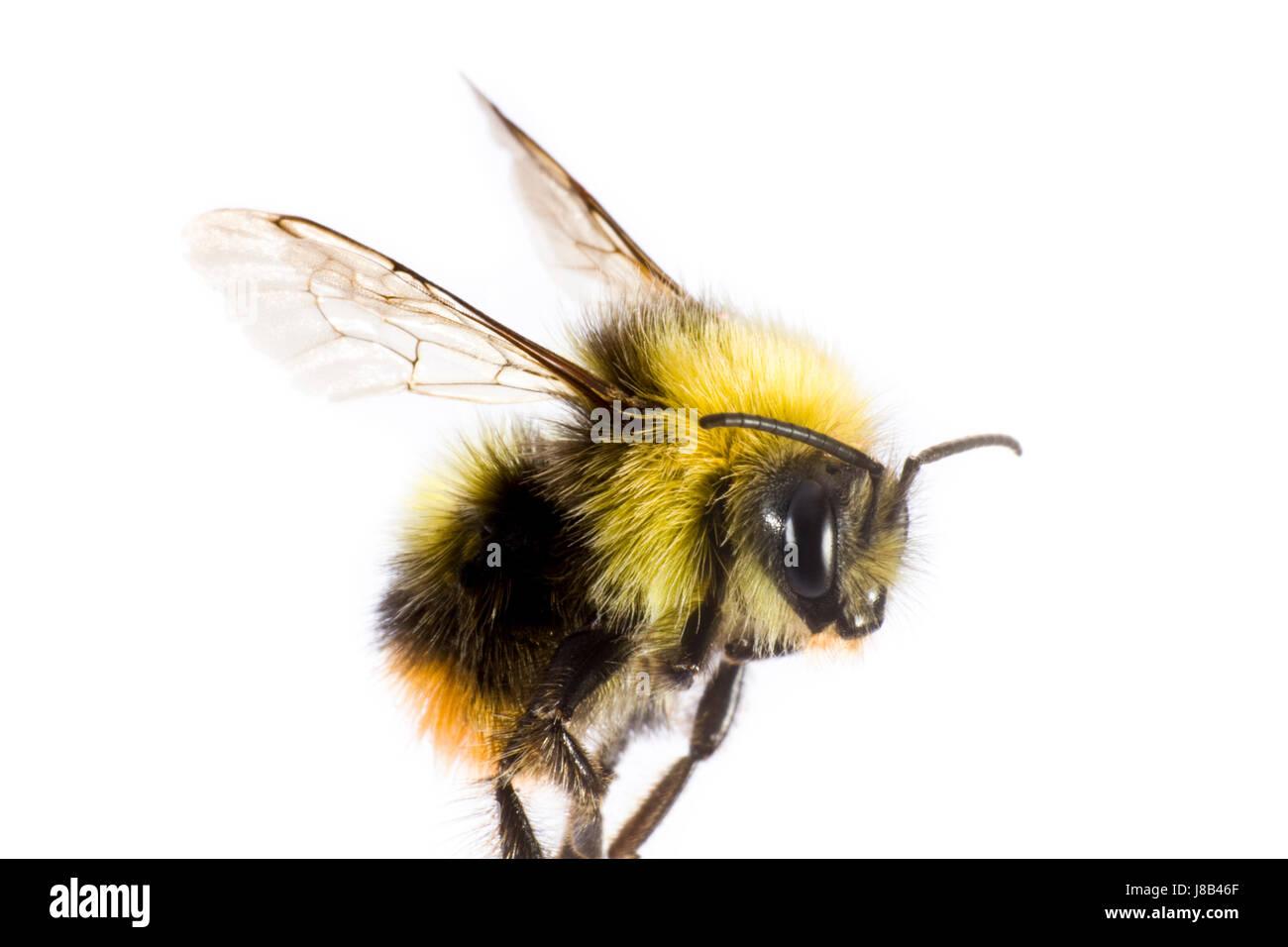 bee sting skin stock photos u0026 bee sting skin stock images alamy