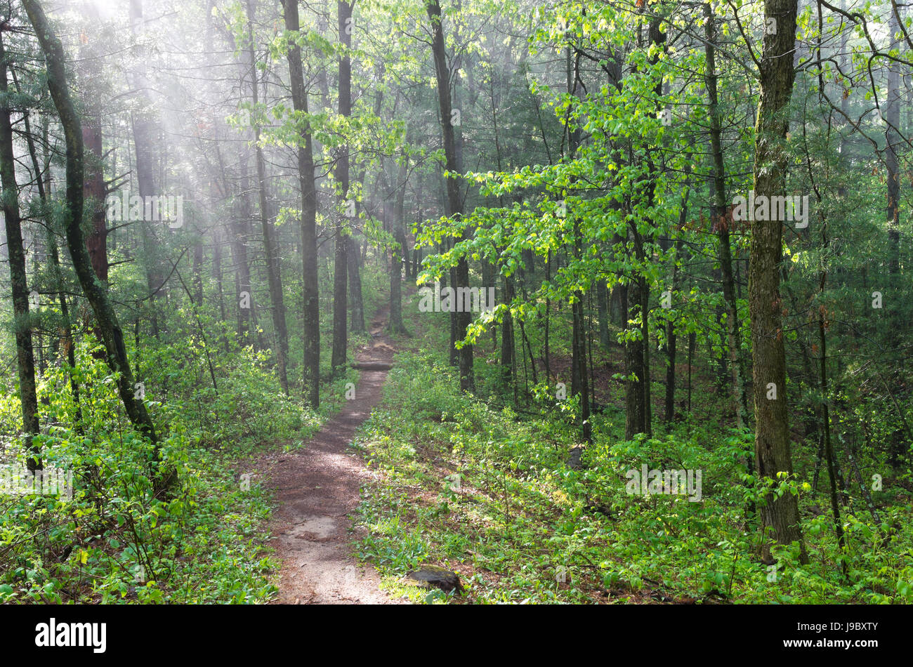 Misty Green Forest Nature River Beautiful 1ziw: Lush Green Misty Forest Trail In Castle Mound Pine Forest
