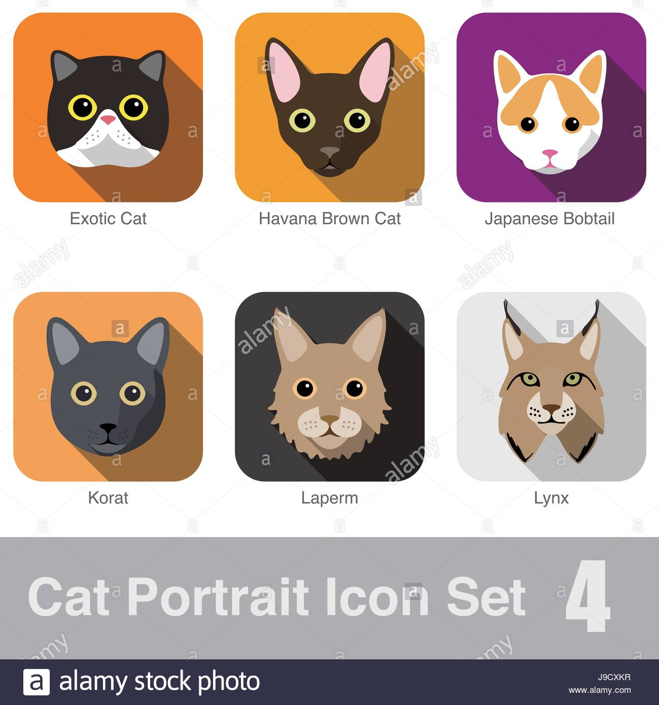 Cat breed face cartoon flat icon design Exotic Cat Japanese