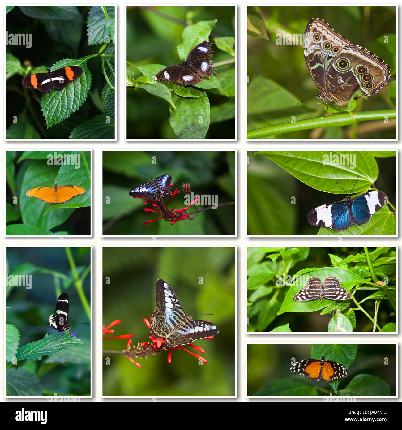 butterfly collage collection of colored butterflies stock photo