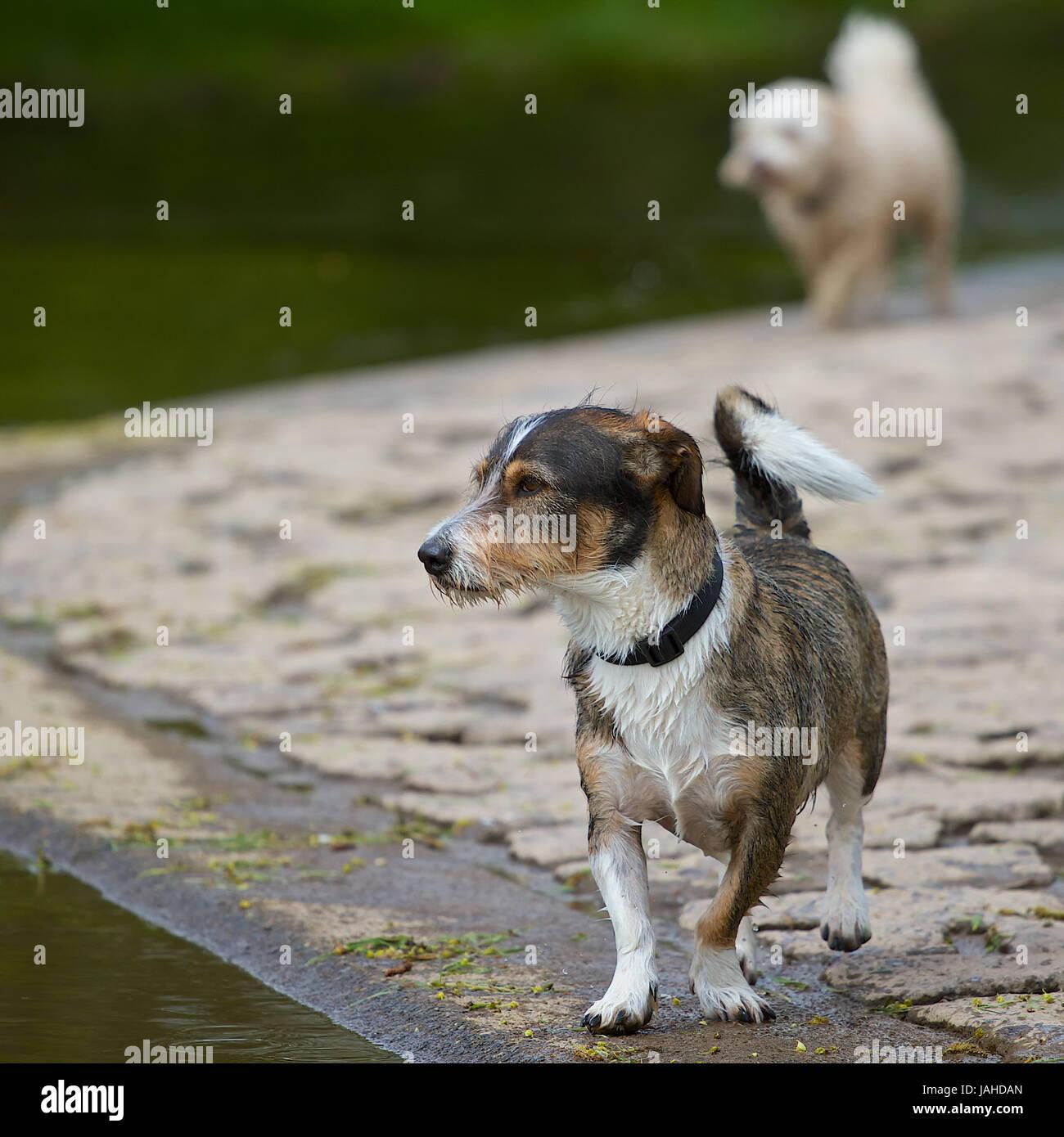 Ist ein dackel ein terrier