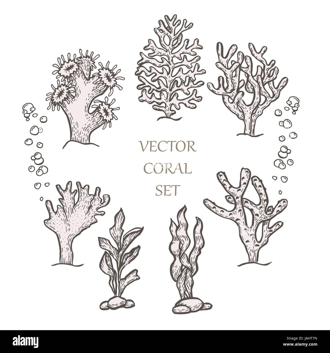 hand drawn set algae seaweed corals stock vector 299477549 floral