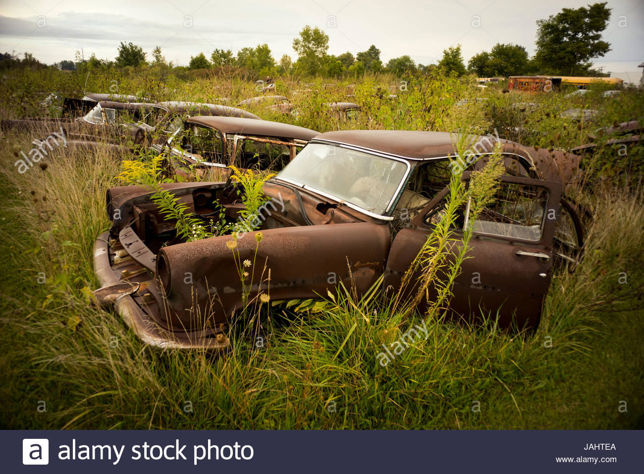A field of rusted out old cars at a junk yard Stock Photo, Royalty ...