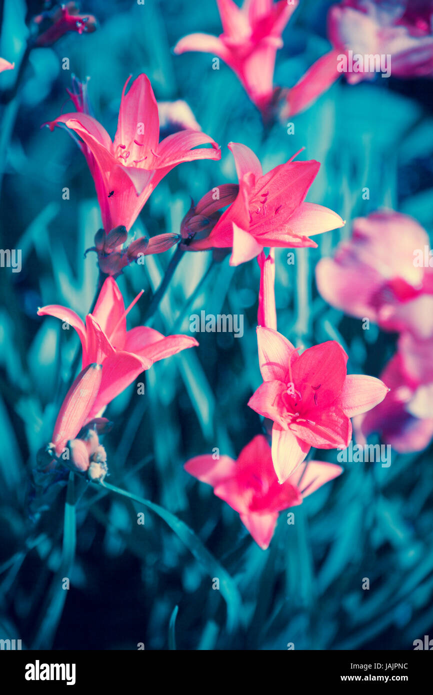 Vintage Wild Lily Flowers Natural Background Stock Photo Royalty