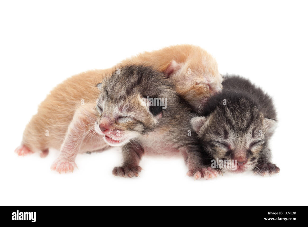 Group of baby cats on white background Stock Royalty Free
