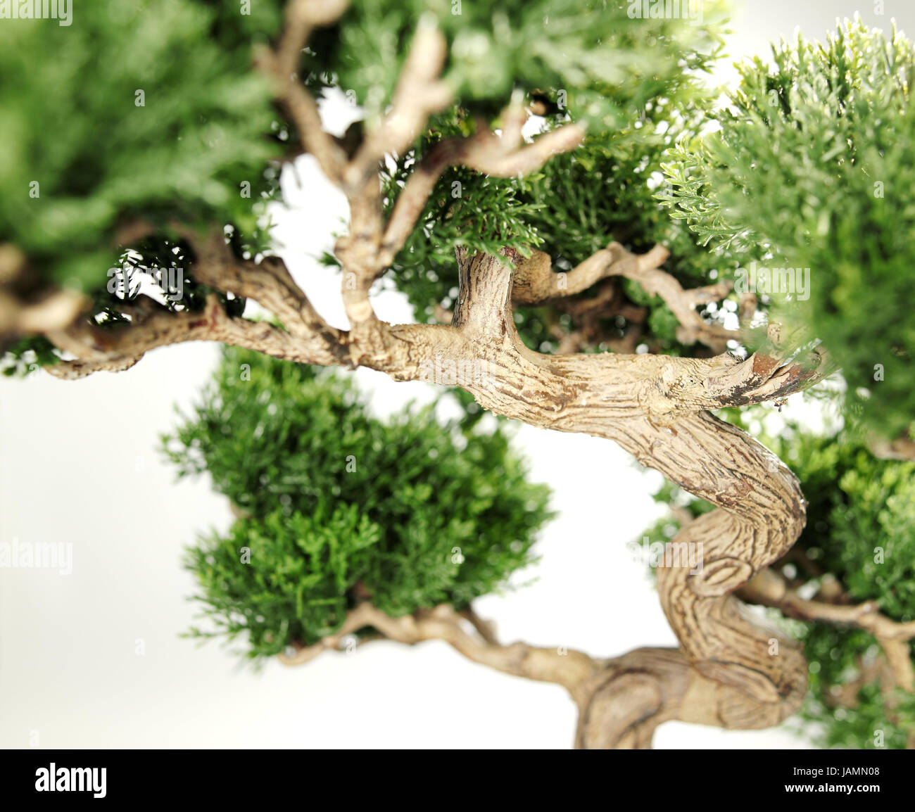 Free photo: Bonsai, Tree, Green, Plant, Small - Free Image on ...