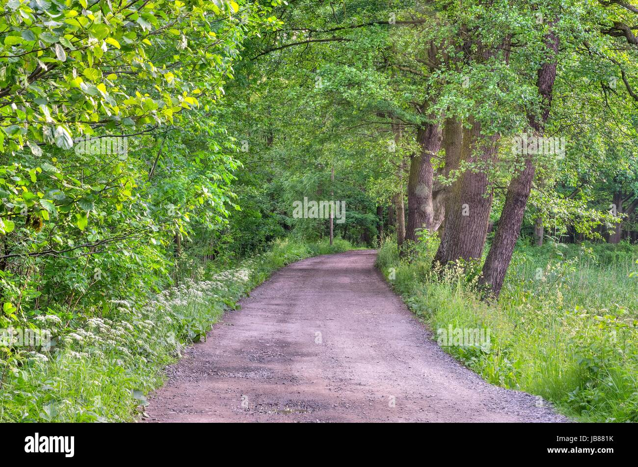 spring forest landscape gravel road in the woods among the green