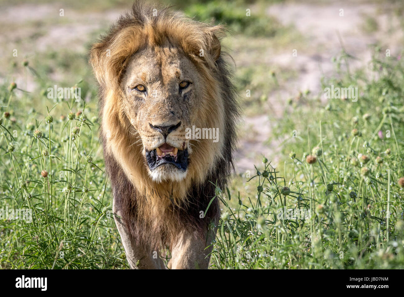 African Safari Walking Safaris Zambia South Luangwa Bush