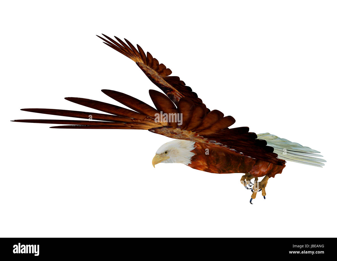 3d digital render of a flying eagle isolated on white background 3d digital render of a flying eagle isolated on white background altavistaventures Images