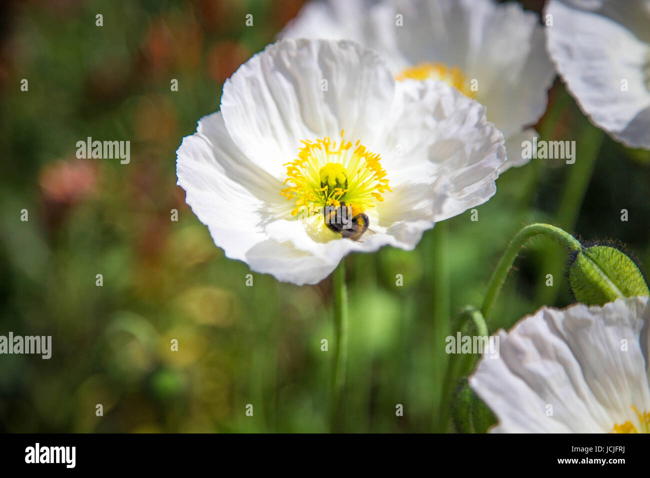 Tropical White Flower With Yellow Center Image Collections Fresh