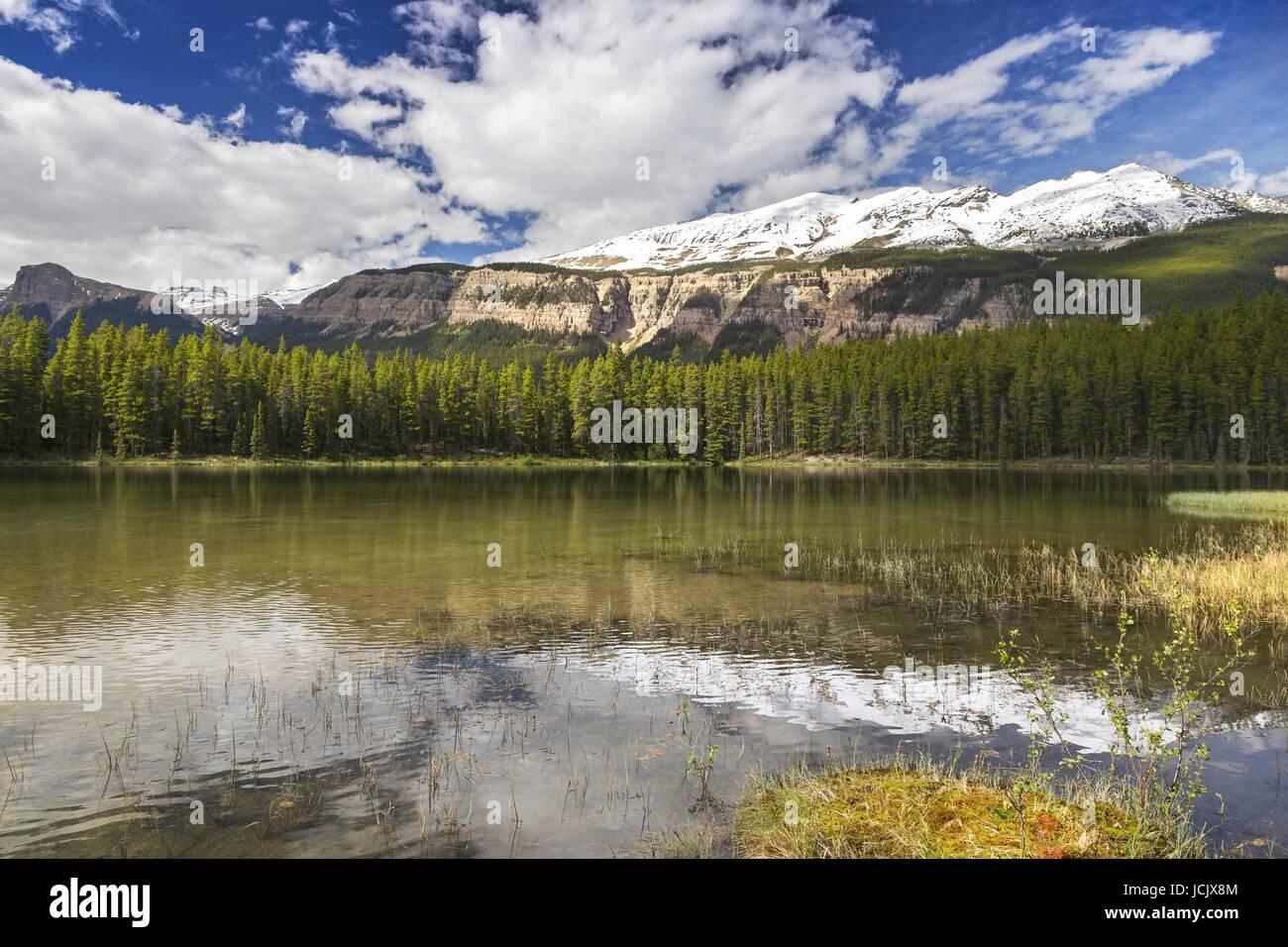 Honeymoon lake jasper national park rocky mountains alberta canada