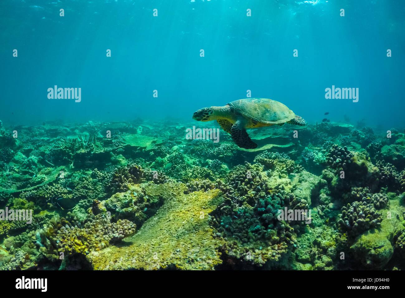underwater sealife underwater animals sea turtle close up over