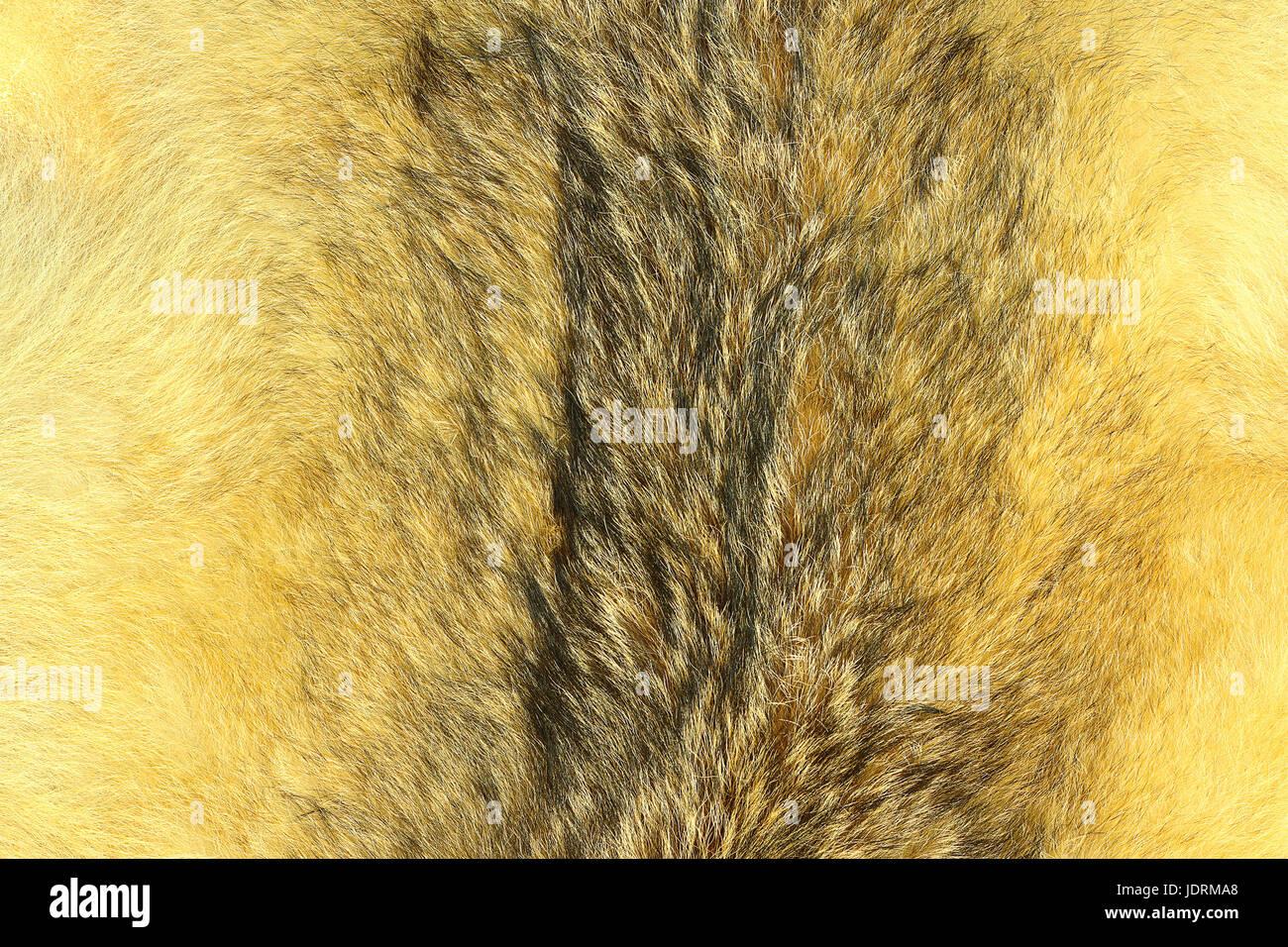 eurasian lynx fur, animal pelt texture for your design Stock Photo ... for Lynx Pelt  279cpg