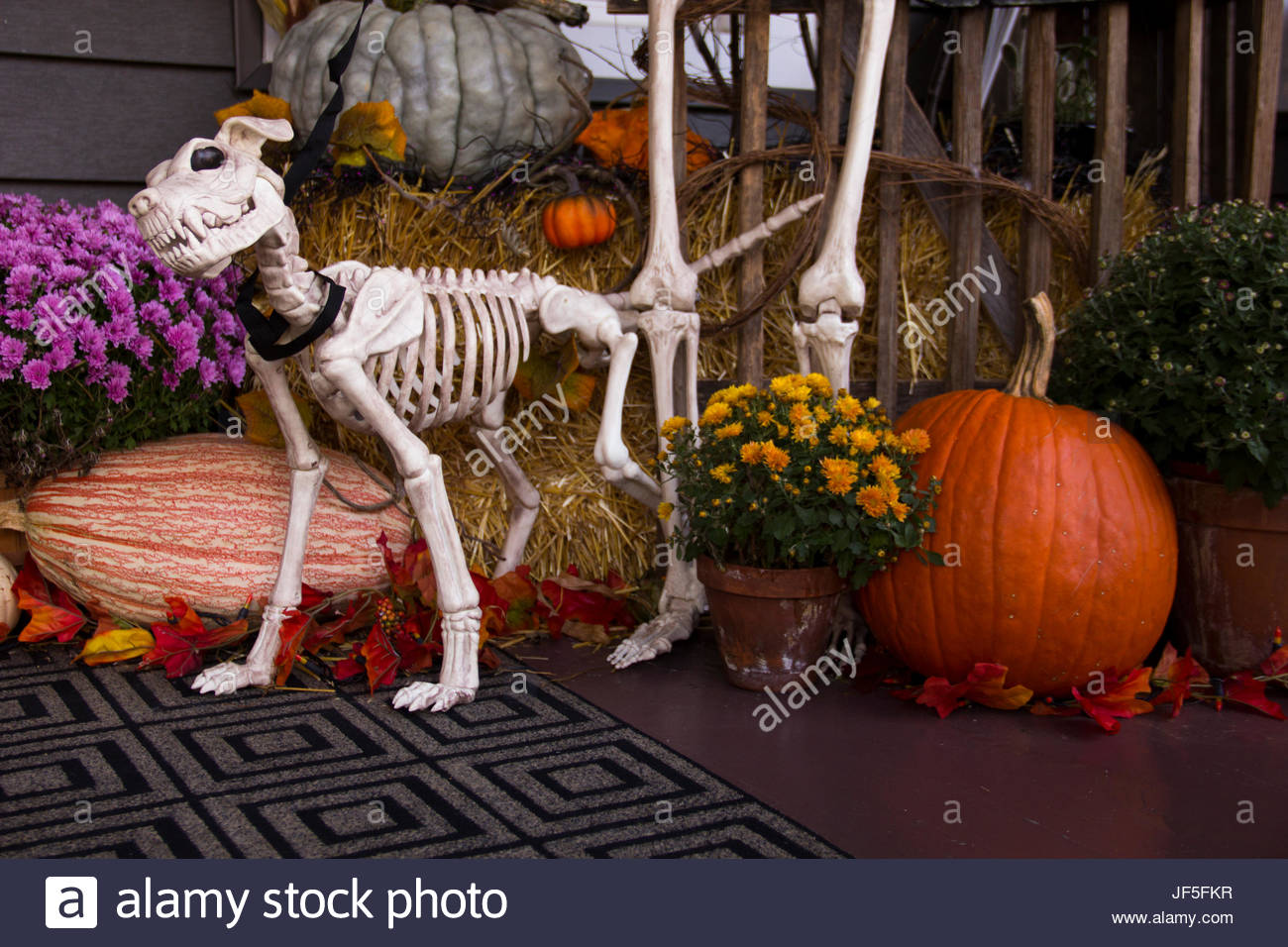 halloween decorations include a hungry looking dog skeleton