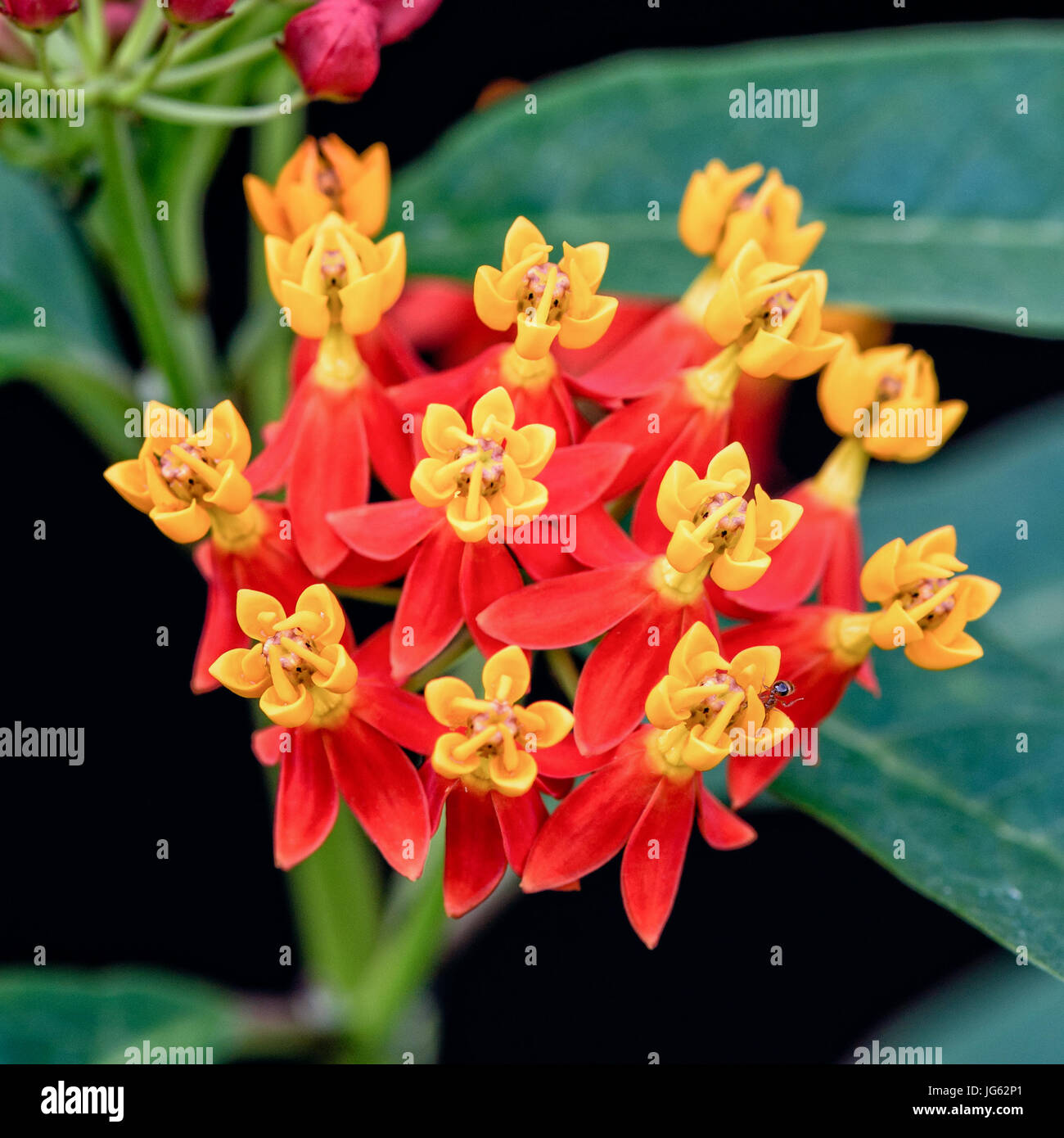 Tropical Flower Names And Pictures Tropical Flower Free Prissy