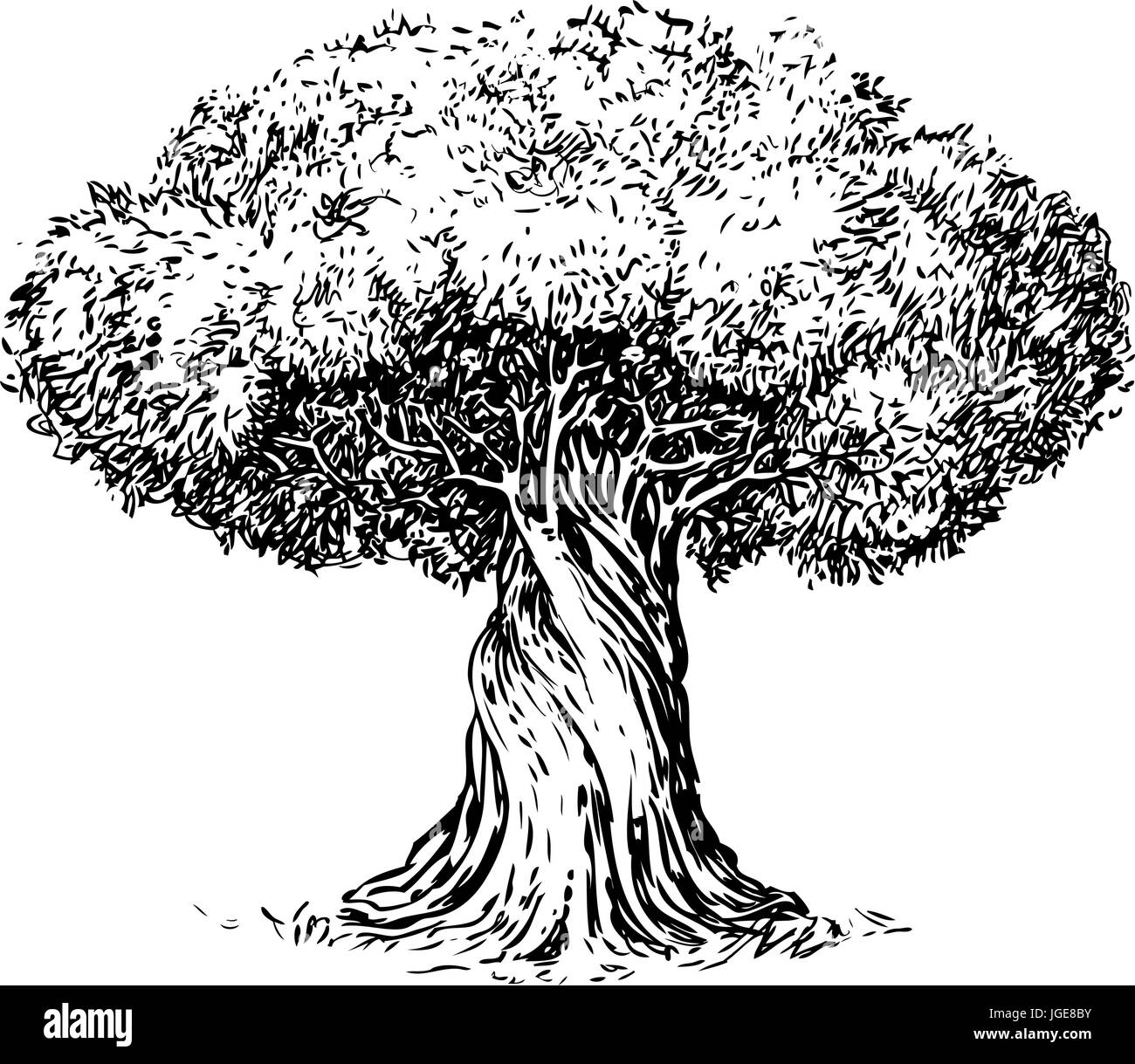 olive tree old engraving ecology environment nature sketch