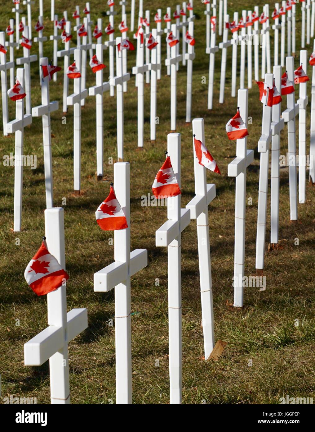 white crosses with canadian flags for remembrance day stock photo