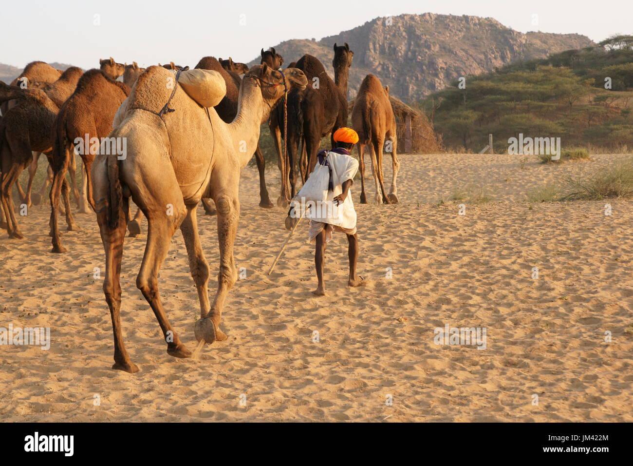 camel fair animal annual stock photos u0026 camel fair animal annual