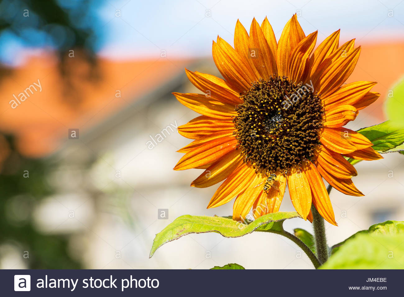 Flower photography contemporary flowers sunflower plant yellow flower photography contemporary flowers sunflower plant yellow flowers flowers with sunlight beautiful flowers close up izmirmasajfo
