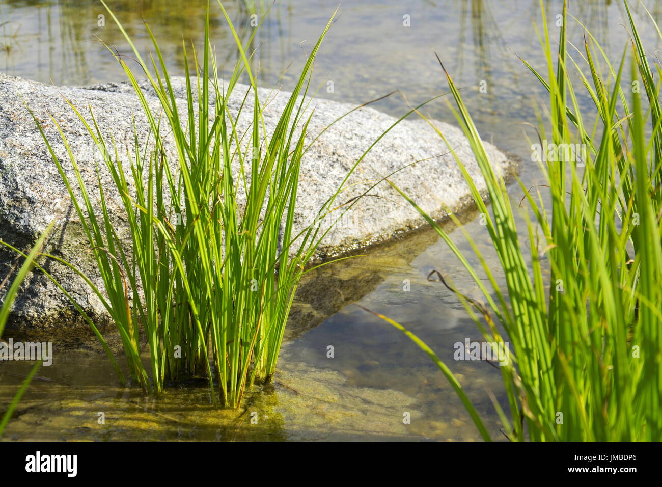 Pond liner stock photos pond liner stock images alamy for Natural pond plants