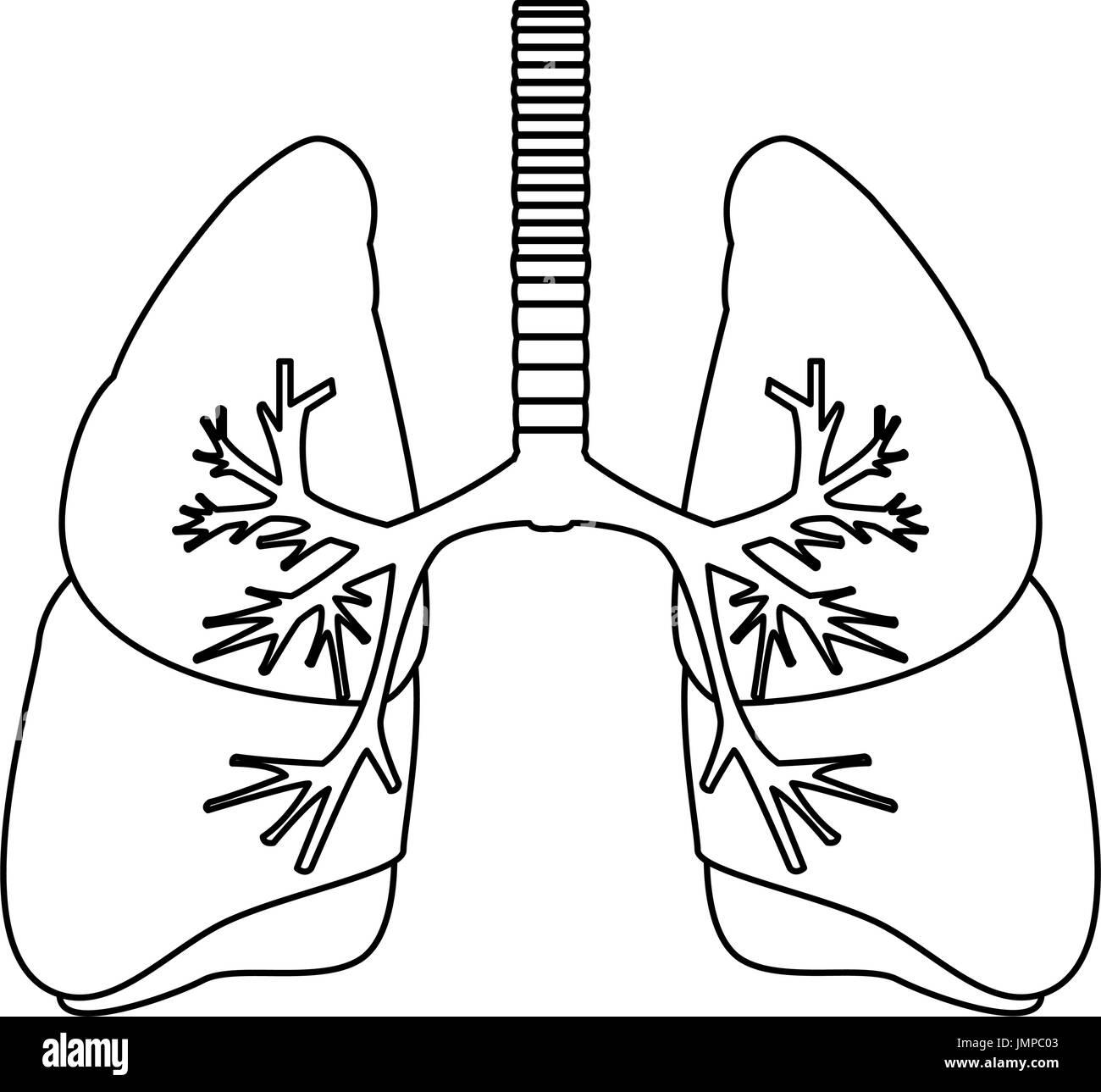 Human lungs anatomy stock vector art illustration vector image human lungs anatomy ccuart Choice Image