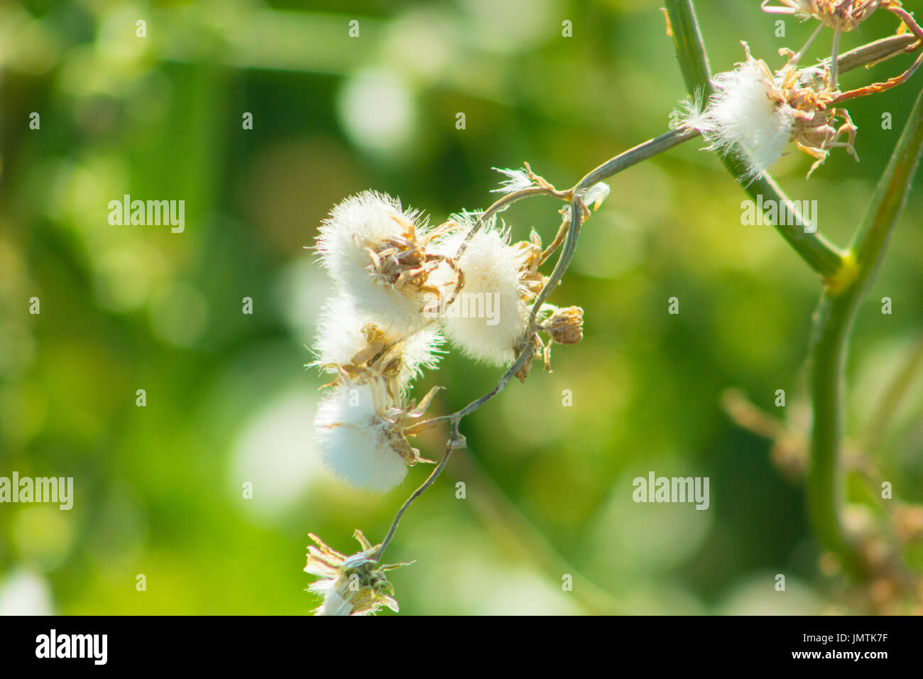Beautiful Spring Flowers Blooming Under The Sun Different Types Of