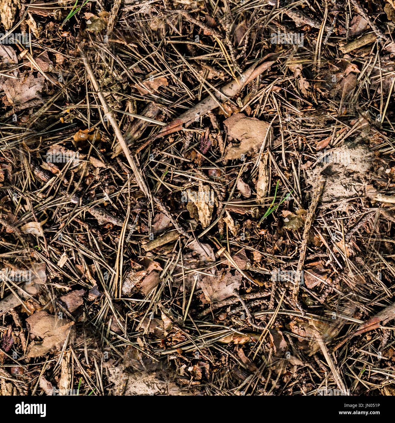 tall grass texture seamless. Seamless Dry Brown Summer Forest Ground. Background, Texture Tall Grass
