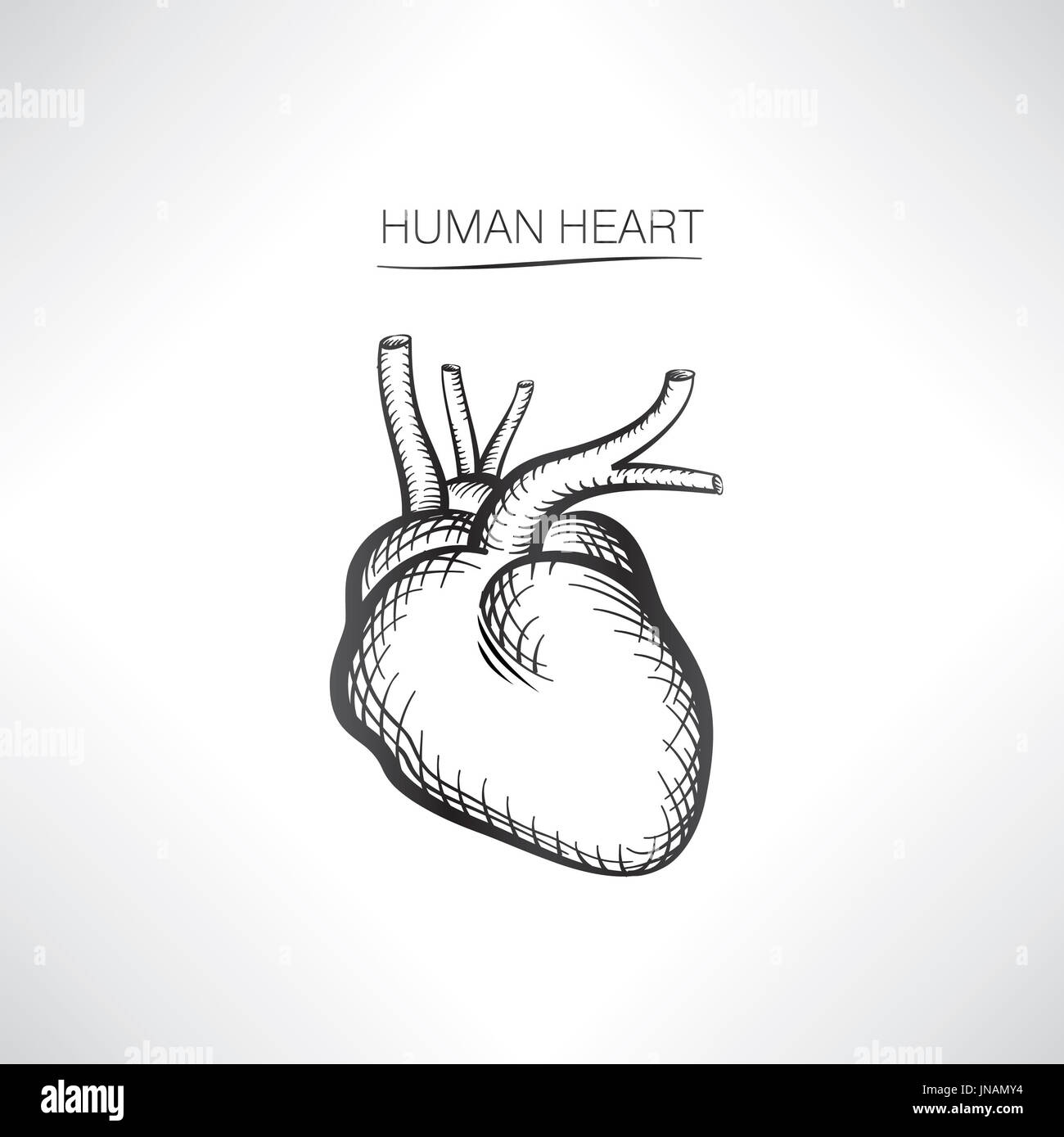 Human heart isolated internal organ icons sketch stock photo human heart isolated internal organ icons sketch ccuart Gallery