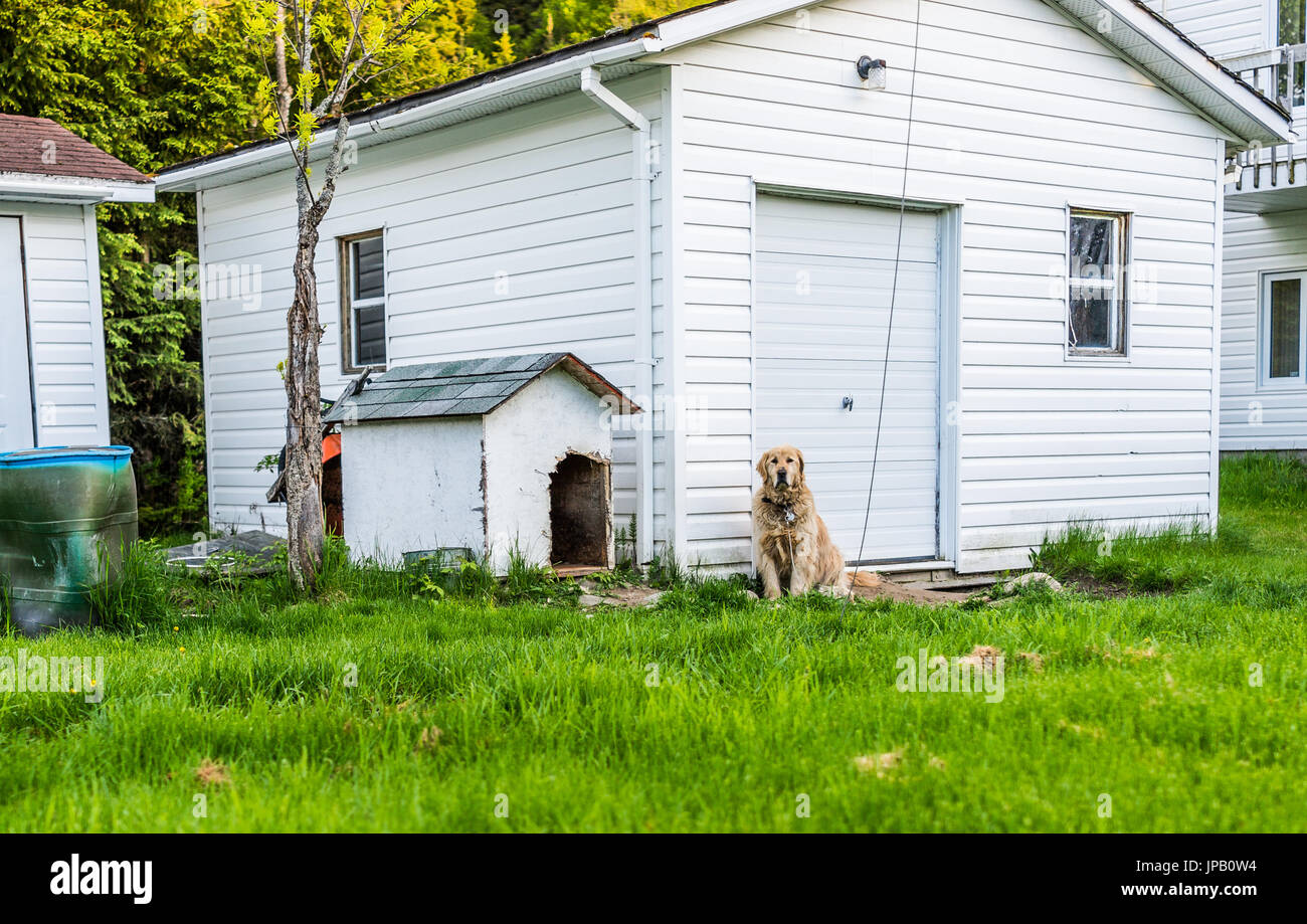dog sitting in front of house stock photos u0026 dog sitting in front