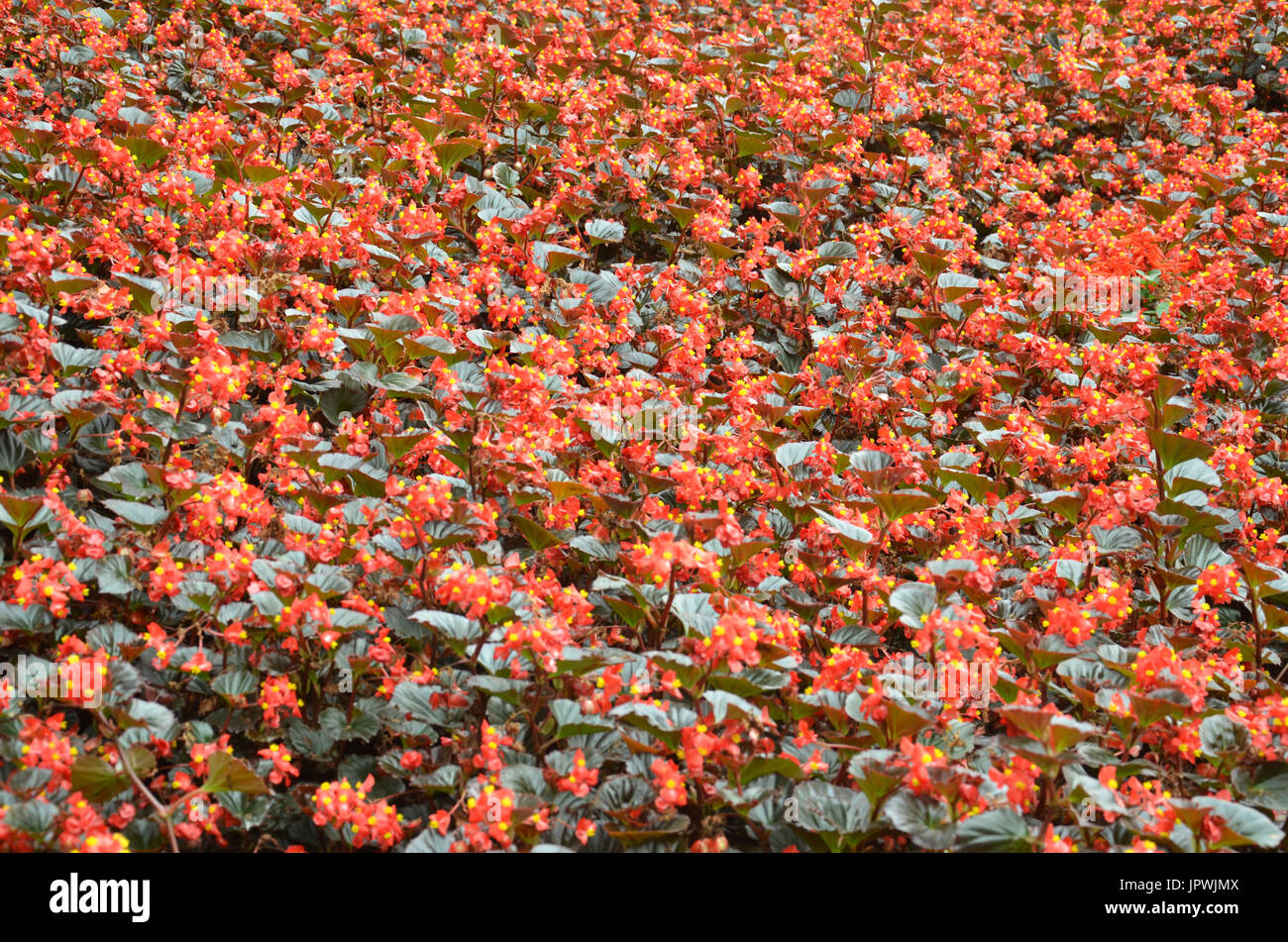 Extraordinary and natural beauty stock photos extraordinary and natural beauty stock images - Flowers that bloom all year round ...