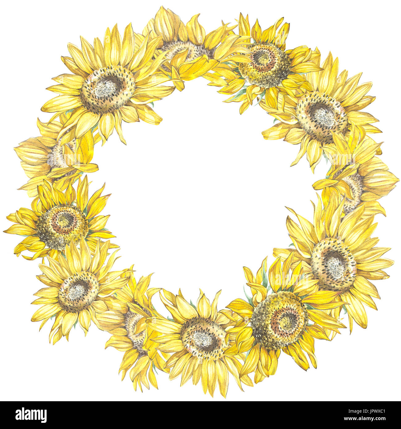 Illustration of a sunflowers wreath in watercolor style wreath in watercolor style beautiful round decor for invitations greeting cards posters kristyandbryce Images