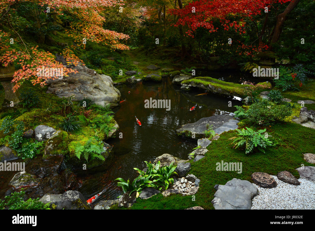 Maple Leaves In Autumn Colors With Moss Stock Photos