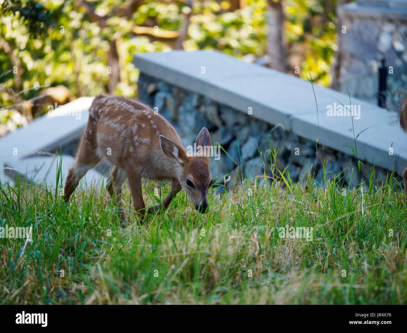 bambi stock photos u0026 bambi stock images alamy