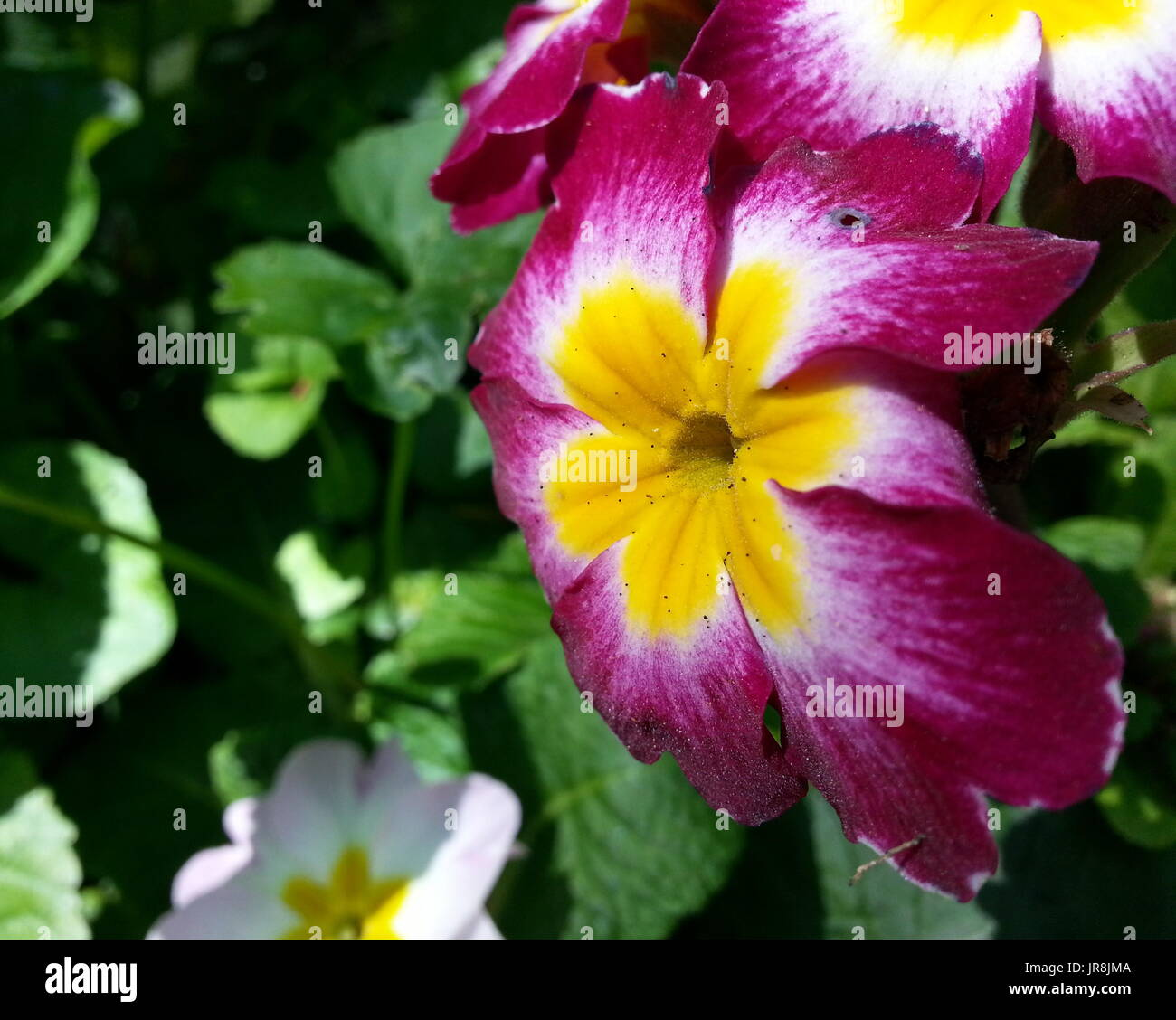 Pink Flower With Yellow Center Stock Photo 152010330 Alamy